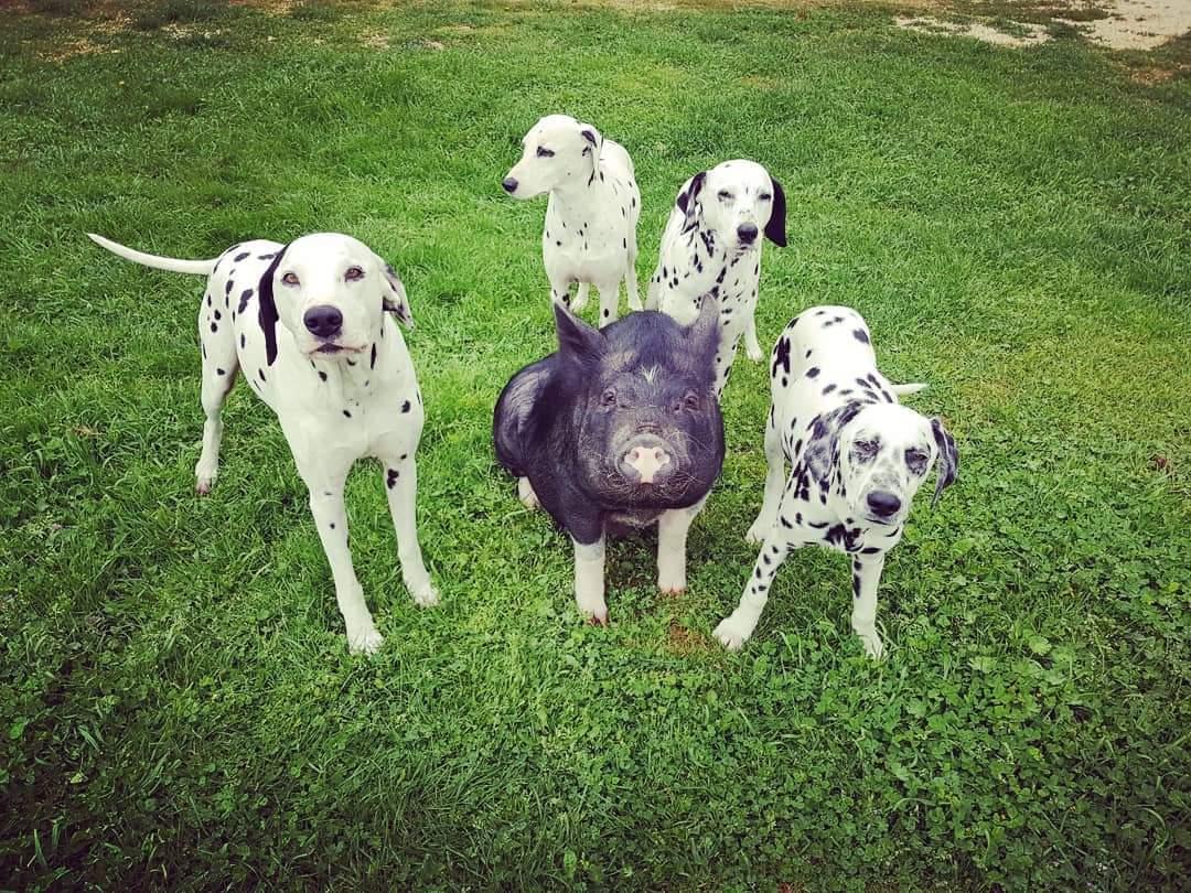 Nos chiens